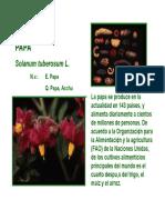 papa silvetres.pdf