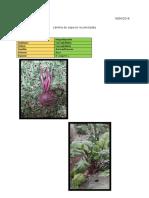 Herbario Digital.docx