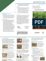 brachiaria_grass _brochure