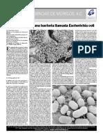 8octecoli.pdf