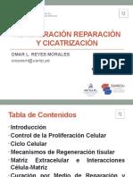 CLASE 03 - REGENERACION Y REPARACION TISULAR (2).pptx