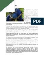 Guacamayo azul.docx