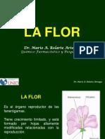 FLOR1.pdf