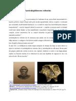 Australopithescus robustus