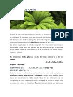 ANATOMÍA DE LAS PLANTAS.doc