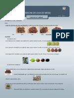 control de calidad de uva.docx