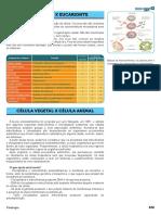 11 Procarionte Eucarionte Vegetal Animal MED.pdf