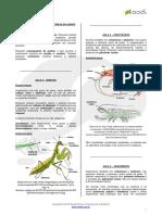Artrópodes.pdf