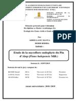 mémoire_final_aprés_correction_..pdf