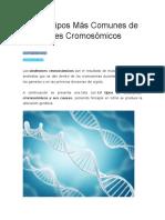 Los 14 Tipos Más Comunes de Síndromes Cromosómicos
