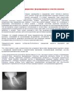 Философия и техники в эндодонтии