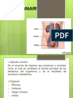 aparatogenitourinario-161017151334.pdf