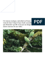 Ile-de-France _ une étude redore le blason de la perruche à collier, un temps considérée comme nuisible - Le Parisien