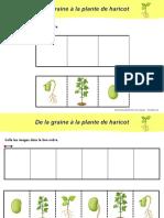 doc_4_images-sequentielles-developpement-graine-de-haricot-_sciences_découvrir_le_mondematernelle