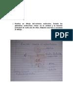 anatomia 10 gtarea