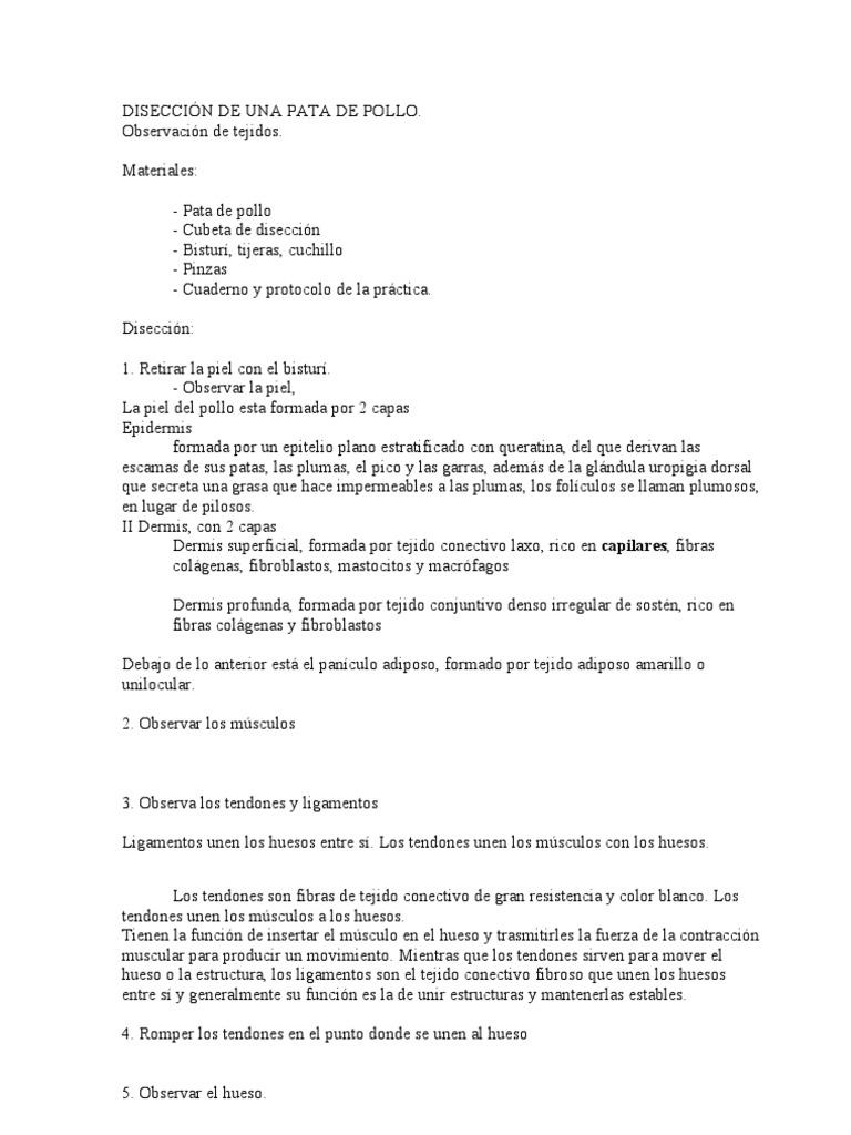 Magnífico Músculos Prácticas De Laboratorio De Anatomía Molde ...