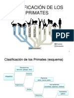 1. Clasificación de los Primates