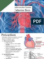 LFF Cardiovascular System - Catherine Bern