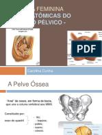 revisao_anatomia_do_assoalho_pelvico