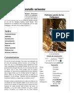 Pelecanus_occidentalis_urinator