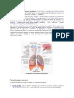 aprato respiratorio.pdf