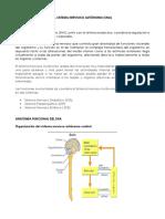 fisiologia-del-sistema-nervioso-autonomo1