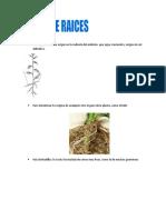 tipos de raíz