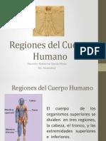 Regiones del Cuerpo Humano