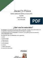 LOS MUSCULOS ED.FISICA