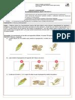 Guía 8 Lenguaje y Comunicación (a color)