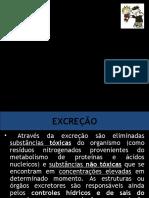 excrecao_comparada - Cópia