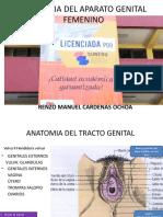 ANATOMIA DEL TRACTO GENITAL FEMENINO
