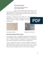 cour microbiologie (chapitre 02 )