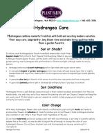 Hydrangea-Care