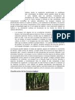 Bosques.docx