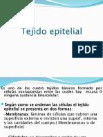 3.TEJIDO EPITELIAL