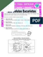 Ficha-Las-Celulas-Eucariotas-para-Quinto-de-Primaria.doc