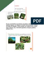 Como y donde viven las plantas