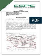 Mapa Reinos Biogeograficos_ Esteban Caizaluisa