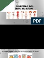 Los sistemas del cuerpo humano clase virtual segundo periodo 301