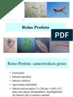 REINO PROTISTA - 7ANO