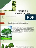 TEMA 3. TRONCO Y RAMIFICACIÓN