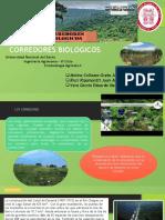 CORREDOR-BIOLOGICO.pptx