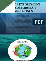 diapositivas exportacion