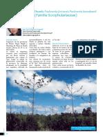 kiri-familia-scrophulariaceae.pdf