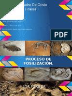 315908017-Fosiles.pdf