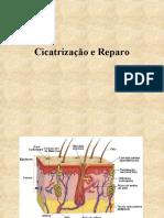 20 - Fisiologia da Cicatrização