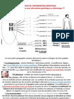 EXPRESSION DE L'INFORMATION GÉNÉTIQUE TD  (activités)