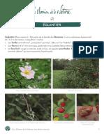 Le_Chemin_de_la_nature E_glantier_.pdf
