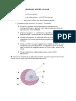 ACTIVIDAD 6 LA FUNCIÓN DEL NÚCLEO CELULAR.doc